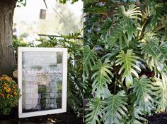 This backyard ceremony was filled with some many great plants!
