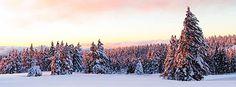 winter Christmas Wallpaper, Merida, Snow, Facebook, Winter, Outdoor, Winter Time, Outdoors, Outdoor Games