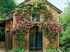 Why You Must Know About the Rose That Survived Katrina - Southern ...