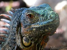 Smiling iguana. He might also go well in the DRAGON category! :)