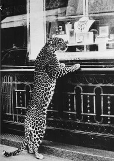 Cartier vintage advertisement 1950