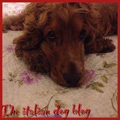"""Nuovo post """"Il cane è..."""" http://www.theitaliandogblog.com/2013/09/un-cane-e.html"""
