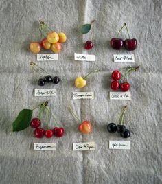 cherries*