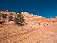 Les «vagues de pierre» du Zion National Park, Utah, Etats-Unis