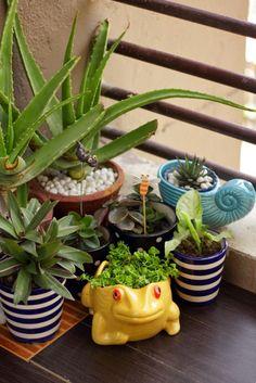 Beautiful Balcony Garden!!