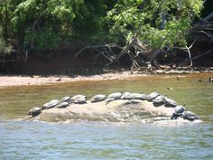 Goats islands and lakes on pinterest for Lake gaston fishing