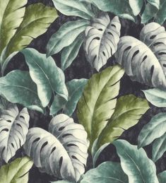 Papel pintado hojas grandes de planta tropical Tamarindo 120042