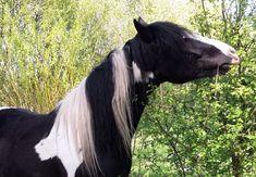 Horse Paddock, Horse Ranch, Pony, Paradise, Horses, Animals, Pepper, Flora, Gardening