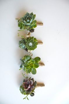 Double Succulent Boutonniere Sets by Eucca on Etsy Bouquet Succulent, Succulent Boutonniere, Boutonniere Pins, Boutonnieres, Wedding Boutonniere, Tulip Bouquet, Floral Wedding, Wedding Bouquets, Wedding Flowers