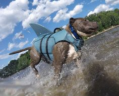 Cowabunga! Find this oh-so-adorable Dolphin Fin Life Jacket at a PetSmart near you! (IG: caninehappyhour)