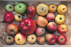 Apples via Bloom Magazine #apples #variation #collection #harvest #autumn