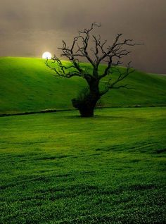 Campo Andaluz – Andalusian Countryside / #trees