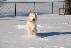 Winston loves the snow // by Betty Monzavi, Grimsby, ON
