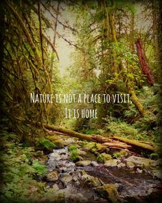 Forest Landscape Nature Photography, Nature Quote Prints, West Coast Wall Art, Landscape Photo Rustic Cabin Decor,Camping Decor Nature Gifts Forest Photography Inspirational Quote Nature by WildTravels Citation Nature, Image Citation, Glamping, Woodland Art, And So It Begins, Forest Photography, Nature Photography Quotes, Nature Quotes, Quotes About Nature