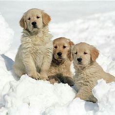 Bellos en la nieve ❤