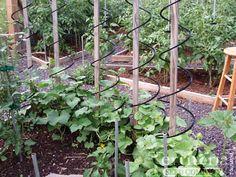Veggie Cage