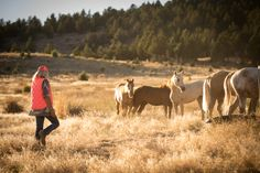 Sanctuary Ambassadors — Skydog Ranch - Wild Mustangs and Burros Wild Animal Rescue, Wild Animal Sanctuary, Wild Mustangs, Wild Horses, Ponies, Make Me Smile, Ranch, Animals, Guest Ranch