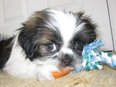 Charlie loves his carrots