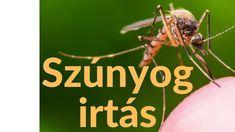 Szúnyogirtás Budapest - Földi Szúnyogirtás Budapest - Szúnyoggyérítés 2020 Budapest, Youtube, Youtubers, Youtube Movies