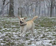 Jak wychować szczęśliwego psa: III zbiórka darów na rzecz Krakowskiego Schroniska...