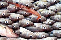 Istanbul fish market Timelapse