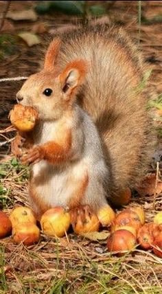 Squirrely Feast #2 ❊