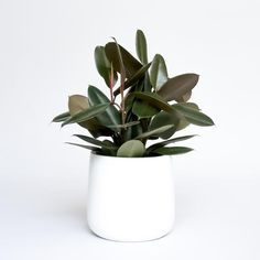 Idea Of Making Plant Pots At Home // Flower Pots From Cement Marbles // Home Decoration Ideas – Top Soop Buy Plants, Potted Plants, Indoor Plants, House Plants Decor, Plant Decor, Philodendron Monstera, Small Nurseries, Ficus Elastica, Rubber Plant