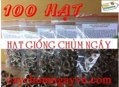 Cây Chùm ngây l Trà chùm ngây l Hạt chùm ngây l Rau Chùm ngây http://caynongaydat.vn/ - http://caychumngay.com - http://caychumngayvn.com