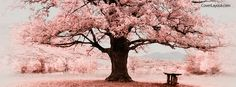 Pink Tree Facebook Cover coverlayout.com