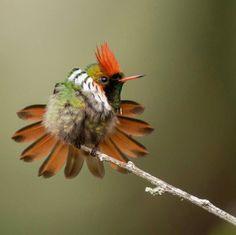 Best birds of world Brazil Pretty Birds, Love Birds, Beautiful Birds, Birds 2, Small Birds, Colorful Birds, Exotic Birds, Information About Birds, Belleza Natural