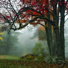 ~~ Color Beneath a Blanket of Fog - Brownfield, Maine ~~