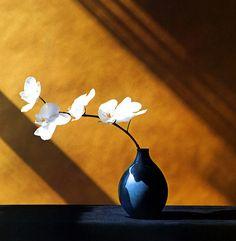 Robert Mapplethorpe  American Photographer  1946-1989      Orchids, 1982