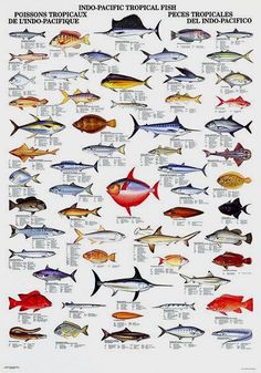 97 Best Fish Chart Images Fish Chart Gone Fishing Diving