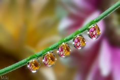 Photograph Water angels by Miki Asai on 500px