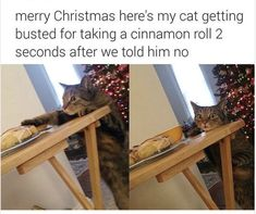 Funny Cat Memes 772156298590228331 - Happy Caturday everyone! Sit back and enjoy these cat memes on us. # cat memes # funny memes # caturday # memes # animal memes # funny cats Source by Funny Animal Memes, Cute Funny Animals, Funny Animal Pictures, Funny Cute, Best Funny Pictures, The Funny, Cute Cats, Funny Memes, Dog Memes