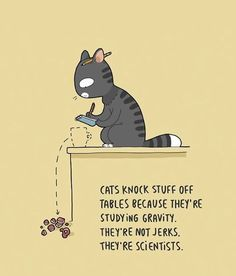33 Funny & Cute Cat Comics That Will Leave You Wanting More - World's largest collection of cat memes and other animals Funny Cute Cats, Cute Cats And Kittens, I Love Cats, Funny Animals, Cute Animals, Kittens Meowing, Funny Kittens, White Kittens, Kittens Playing