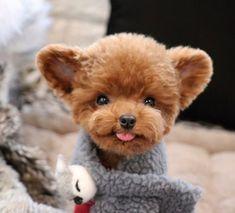 """7,309 kedvelés, 71 hozzászólás – Teddy Bear SHU familly (@bibi_shasha) Instagram-hozzászólása: """". 너무춥고바쁜하루였지만 아이들의 따뜻한 온기로 몸도마음도 사르르💕 굿밤되세요🐻 #르꾸꾸 . . . #Shu #슈 #TeddySHU #Teddybear #poodle…"""""""