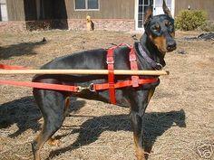Sled-Cart-Wagon-dog-harness-60-100