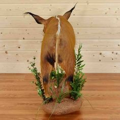Red River Hog, Taxidermy For Sale, Trophy Rooms, Hair Cover, Wood Crates, Full Body, Habitats, Giraffe, Grass