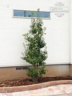 花壇・植栽の施工例 113件公開中|千葉・埼玉・東京・茨城