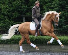 For all those trying to sell me a horse: I don't want it unless it looks like this :-)