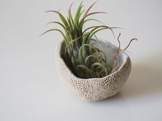 Air plant holder - this indoor air plant holder has been handmade with air dry…