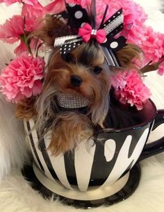 Carnations and Yorkshire Terrier Mini Yorkie, Teacup Yorkie, Teacup Puppies, Cute Puppies, Cute Dogs, Dogs And Puppies, Yorkies, Yorkie Puppy, Tattoo L