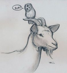 Image result for musical goat illustrations