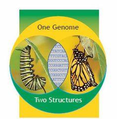 epigenetic caterpillar screen shot close up