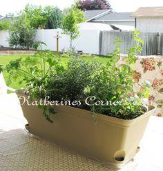 table top herb garden