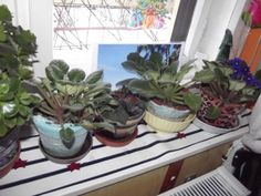 fokföldi_turánné Szolnoki Valéria Plants, Plant, Planets
