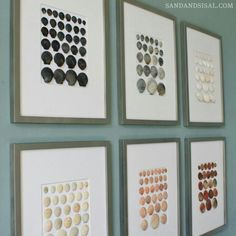 Cool way to display scallop shells