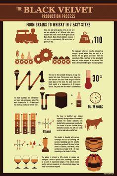 From Grains to Whisky in 7 Easy Steps Infographic: Black Velvet Distillery
