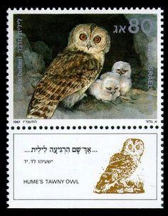 BIBLICAL BIRDS 2